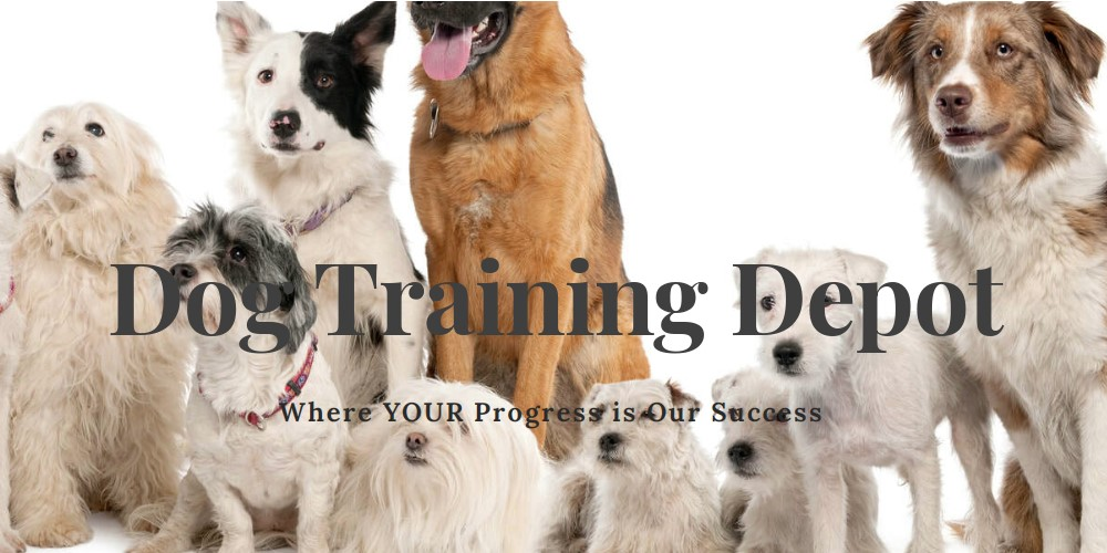 dog training depot home page