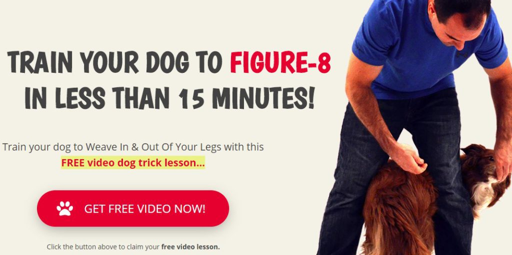 success dogs home page
