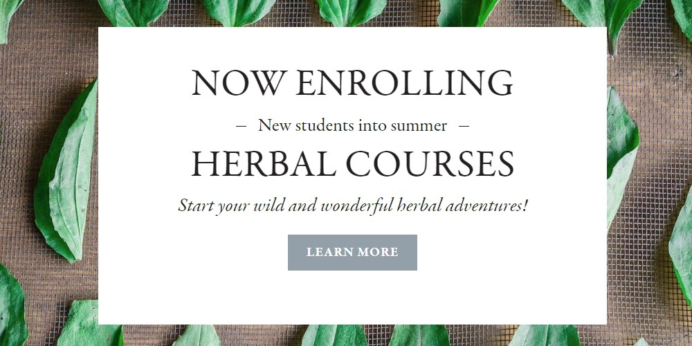 the herbal academy home page