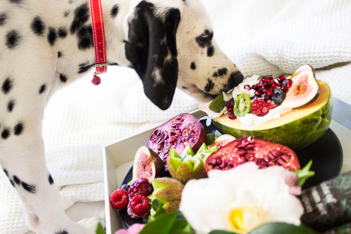 The image shows a photo of a dalmation sniffing a box of fresh produce of fruits and vegetables. There are pet food subscription services that provide all-natural pet food deliveries like this hamper on a weekly, fortnightly or monthly basis and for various pet diets too.